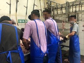 ...兰卡学生在台湾屠宰场打工.(图源:台媒)-印尼留学生在台湾被迫...