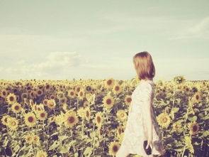 ...爱的高清向日葵唯美图片