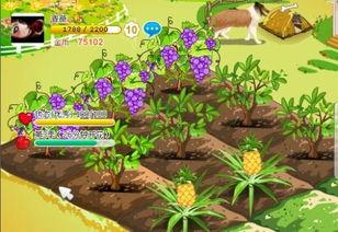 为什么QQ空间中的开心农场10级就可以种比10级高的水果了