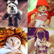 喵大圣西游记-万圣节就要来了,在给自己精心打扮的同时,千万不要忘了家里的宠物...