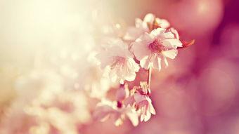 表达心情不好的伤感句子 描写心情失落的伤感句子