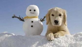 冬天怎么堆雪人?