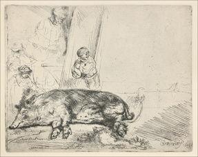 伦勃朗动物素描作品 有狗 狮子 牛 猪等