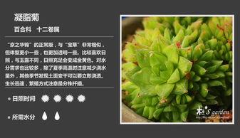 ...0多种多肉植物对照图,再也不愁叫什么名字了