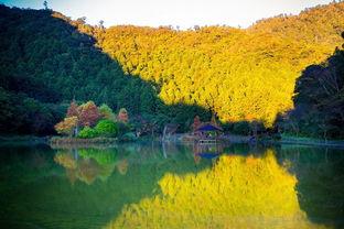 ...兰枫红、如梦似幻明池湖畔落羽松、全台最大桧木神木园.图/力丽集...