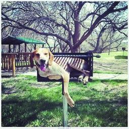 博狗bf88-Maddie的狗狗从马戏团退休后,日子变得枯燥乏味,于是它不停地变...