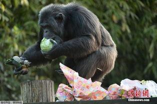 法国动物复活节收到礼物 急拆包裹萌萌哒