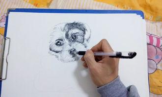 最近的 中性笔画动物 作品 素描 纯艺术 兔子凌