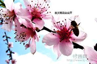 描写春天的花的段落