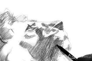 素描 狮子的绘画步骤 2