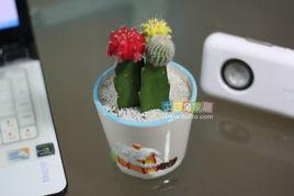 9厘米-...植物 高:12cm-14cm 花 盆:卡通瓷盆 口径: 9cm -11cm 高:7cm -...