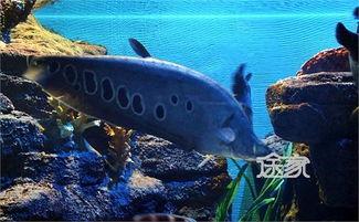 ...京海底世界门票多少钱 北京海底世界有哪些