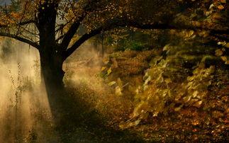 入金秋.   寒霜临沐大地,直把个青葱林树逼得片片金黄.