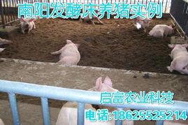 冬天发酵床养猪的几个管理要点冬季养猪发酵床维护技术 启富发酵床菌...