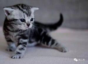 养猫会不会使猫身上的细菌会不会传染给人