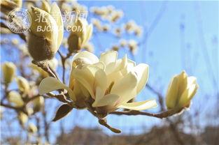 ...梦开始的地方 春暖花开