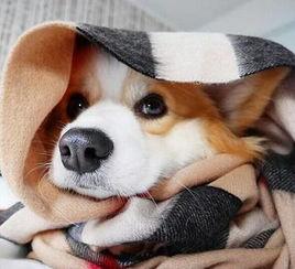 冬天躺在被窝里脚出汗 斗图表情包大全 - 与 冬