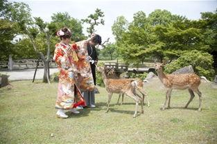 素可泰圆叶立枝山乌龟-日本奈良和服出租体验地图