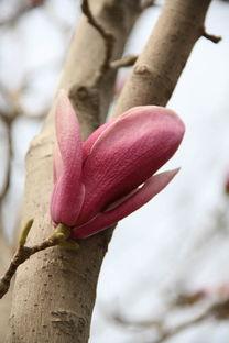 花与树影评-树干与花的哲理