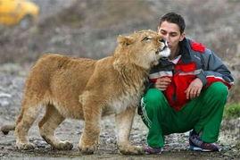 你敢吗 养只野兽当宠物