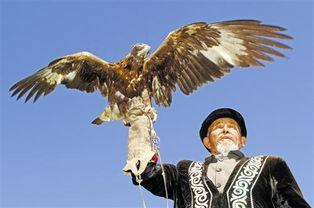 哈萨克族认为蓝天下最勇猛、强悍... 驯鹰也由最初的狩猎所用演变成现...