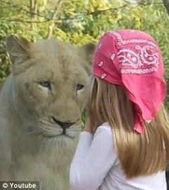法国zoo儿童-法女童动物园照相引母狮定睛观看