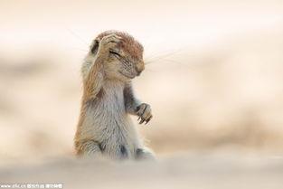 ...生命搞笑 野生动物喜剧摄影