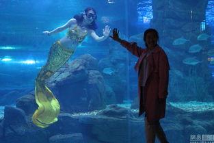 长春 美人鱼 的生活 海底穿梭与鲨鱼共舞