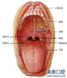 上颚溃疡 最近几个月总是在口腔上颚上几个小泡