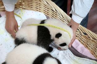 上海野生动物园驴妈妈会员日成人票 7.16 7.17出游