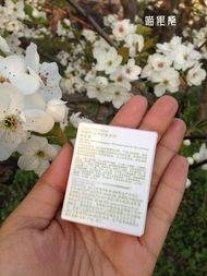 写在桃花盛开的季节 一吐为快