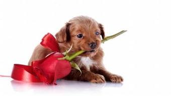 玫瑰花卡通图片设计
