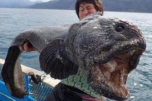 中华鲟价格多少钱一斤-捕获27斤中华鲟 盘点世界奇特巨怪生物