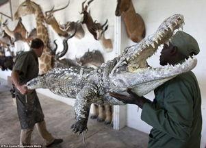 守猎爱- 对许多喜爱打猎的人来说,非洲国家纳米比亚根本是天堂,因为当地动...