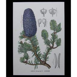 植物科学画中的 匠人 孙英宝