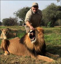 英国一名野生动物专家与非洲狮和谐共处-英国专家为雄狮按摩 凶猛野...
