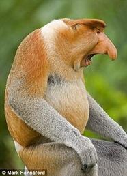 英国举行丑陋动物评选 我很丑但也很珍贵