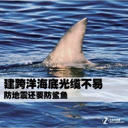 建跨洋海底光缆不易 防地震还要防鲨鱼