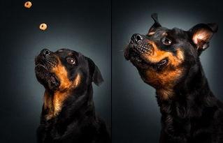 ...道,为了吃,你家狗狗有多努力,老不容易了...