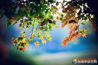 描写秋天的风的句子