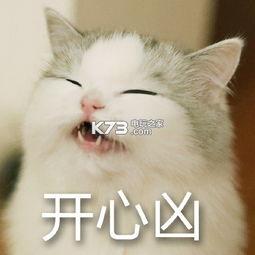 猫咪超凶表情包下载超凶猫表情包下载 k73电玩之家