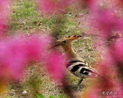 春去花还在,人来鸟不惊