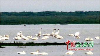 鄱阳湖看候鸟时间 看候鸟地点