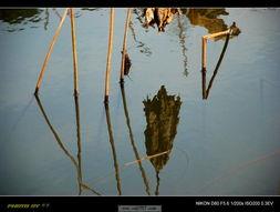 ,枝干叶枯,在寒风之中摇曳,在清清的池水中映照,也是别样的凄美...