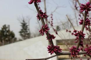 春暖花开 清音公园赏花随拍记