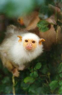 法国动物园17只濒危猴子被盗 警方称盗贼是内行