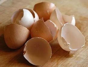 鸡蛋壳去黑头的功效好   鸡蛋壳在泥土中产生的肥料可不比买来的差哦...