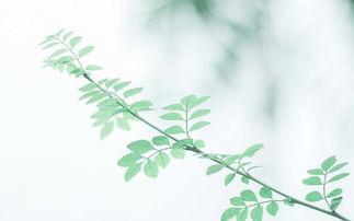 小清新树叶绿色护眼高清图片壁纸