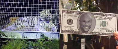 ...有梅威瑟头像的钞票-梅威瑟生日蛋糕用一箱钱堆积 百元美钞挂满树