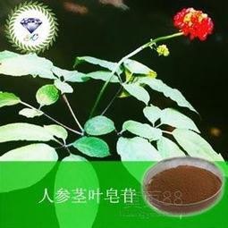 【人参茎叶皂苷植物提取物武汉价格优惠】-黄页88网